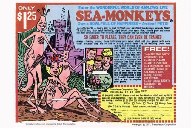 sea_monkey_pic_0