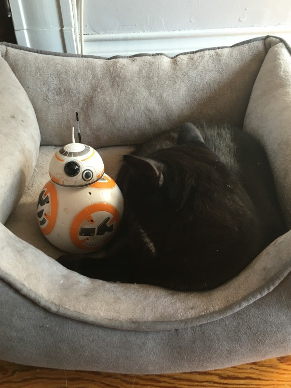 BB-8 and Lex. Our other cat Zod's off making people kneel before him.